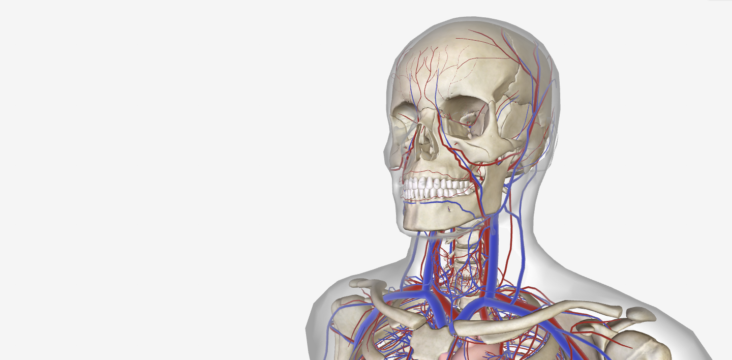 Free 3D anatomy app that embeds on LearnZone.
